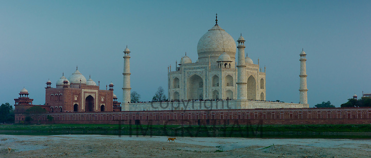 Dog strolls past The Taj Mahal North Side viewed across Yamuna River at sunset , India