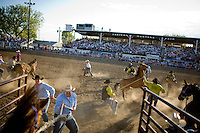 Archive: Bucking Horse Sale