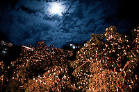 A tree is seen full with birds in Antioquia August 1, 2012. Photo by Eduardo Munoz Alvarez / VIEW.