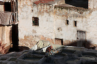 High angle view of Chouara Tannery, Fez, Morocco, pictured on February 23, 2009 in the evening. A lone tanner works in the shade; behind him the crumbling stuccoed walls soak up the sun. The Chouara tannery is the largest of the four ancient tanneries in the Medina of Fez where the traditional work of the tanners has remained unchanged since the 14th century. It is composed of numerous dried-earth pits where raw skins are treated, pounded, scraped and dyed. Tanners work in vats filled with various coloured liquid dyes derived from plant sources. Colours change every two weeks, poppy flower for red, mint for green, indigo for blue, chedar tree for brown and saffron for yellow. Fez, Morocco's second largest city, and one of the four imperial cities, was founded in 789 by Idris I on the banks of the River Fez. The oldest university in the world is here and the city is still the Moroccan cultural and spiritual centre. Fez has three sectors: the oldest part, the walled city of Fes-el-Bali, houses Morocco's largest medina and is a UNESCO World Heritage Site;  Fes-el-Jedid was founded in 1244 as a new capital by the Merenid dynasty, and contains the Mellah, or Jewish quarter; Ville Nouvelle was built by the French who took over most of Morocco in 1912 and transferred the capital to Rabat. Picture by Manuel Cohen.