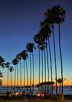 Palm Trees, Dusk, California, San Diego, La Jolla