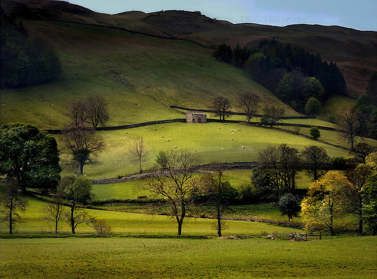 Rolling fields in the Yorkshire dales with stone walling and a barn