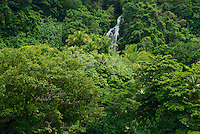 Lush rainforest and waterfall on the Pacific island of Pohnpei, Micronesia