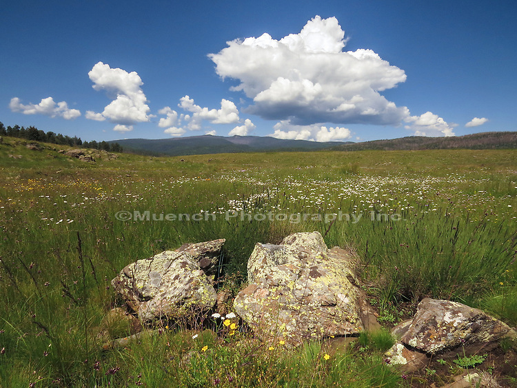Growing afternoon thunderheads over the White Mountains Arizona