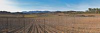 Domaine Mas Gabinele. Faugeres. Languedoc. In the vineyard. France. Europe.