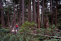 Cathedral Grove in MacMillan Provincial Park near Port Alberni, Vancouver Island, BC, British Columbia, Canada - Hiker on Trail in Old Growth Temperate Rainforest (Model Released Woman in foreground)