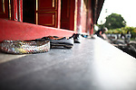 Shoes line the steps of the Mieu Temple inside the Citadel in the former imperial capital of Hue, Vietnam. Built in 1821, the temple honors the emperors of the Nguyen Dynasty, the last of whom abdicated in 1945, as Vietnam sought independence from the French. The temple was one of those least damaged by heavy fighting during the Tet Offensive of 1968, at the height of the Vietnam War. April 21, 2013.