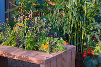 squash zucchini courgette, cabbage, edible flowers tropaeoleum nasturtiums, corn, flowers and vegetable garden mixed together, raised beds, container, chard, viola, calendula, parsley, herbs, sage Salvia, onion