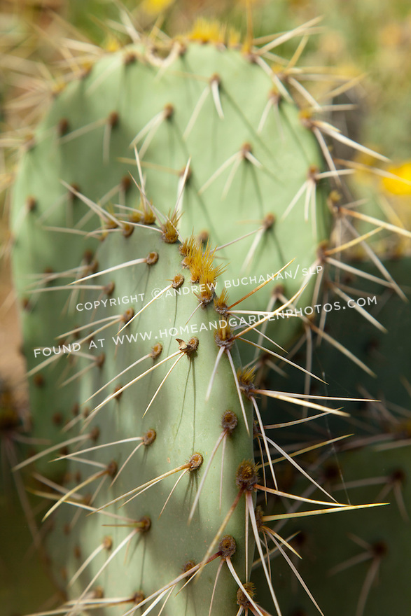 The sharp thorns of a paddle cactus catch the afternoon autumn light.