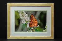 """Fritillary Butterfly"", hand-made pine frame, conservation grade matting, TruVue Museum Glass. Contact us for availability."