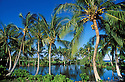 Waipuhi Iki, a native Hawaiian fishpond surrounded by coconut palm trees at Mauna Lani Resort; Kohala Coast, Island of Hawaii.