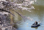 Sightseers aboard rowing boats share an intimate moment as they enjoy the cherry trees that line the moat of Chidorigafuji in Tokyo, Japan on 30 March, 2010. Snow and unusually cold weather has delayed the blossoming of Japanese cherry trees throughout the country.