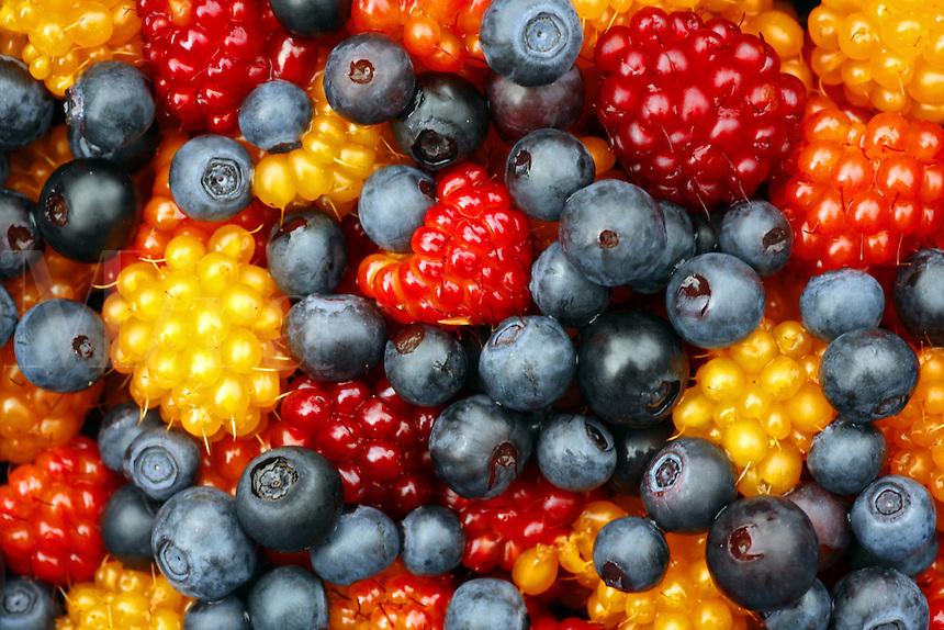 Colorful Berries, Chugach National Forest, Alaska.