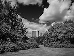 Highrise tower block set behind trees