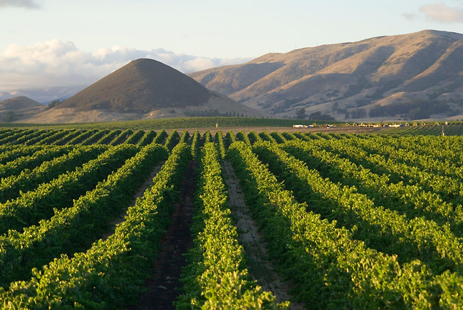 San Luis Obispo vineyard