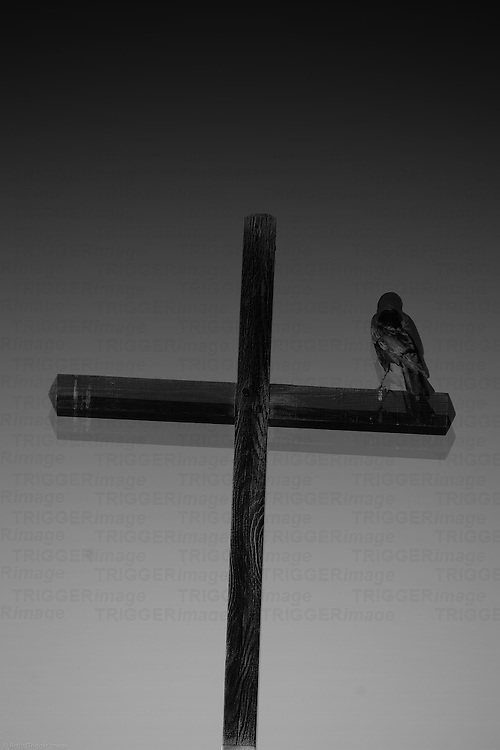 A black raven sitting on a Christian wooden cross.