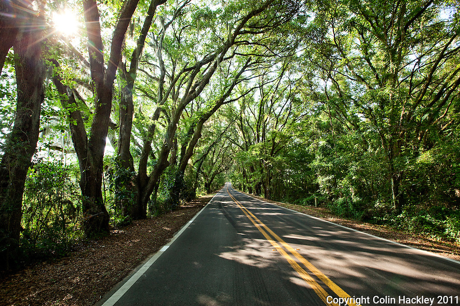 MILLER LANDING ROAD: The drive is one of the gems in Tallahassee's canopy road collection..COLIN HACKLEY PHOTO