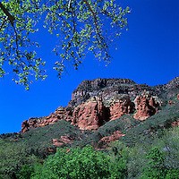 Coconino National Forest near Sedona, Arizona, USA - Basalt and Sandstone Cliffs in Oak Creek Canyon