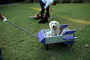 Pam and Andrew Kisala's dog, Daisy, is nearly 15 years old and has troulbe getting around, so they built her rocket ship-shaped wagon and created a small business based around the idea, Wheels for Waggers, July 27, 2011.