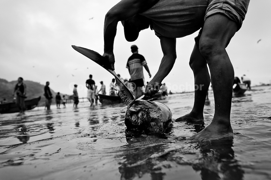 shark overfishing and shark fins trade in ecuador   jan sochor    a dead thresher shark is being finned by a fisherman on the beach of puerto lopez