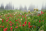 Alpine meadow, Mount Rainier National Park, Washington