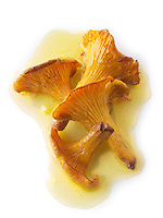 Wiild organic chanterelle or girolle Mushrooms (Cantharellus cibarius) or sauteed in butter
