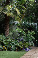 The flowerbed beneath a large palm tree is planted with Fatsia and Agapanthus