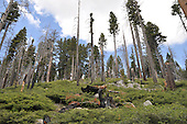 Visions of Yosemite National Park