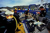 Bluefin Tuna, Thunnus thynnus, harvest, Mexico, Pacific Ocean