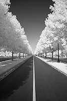 Center line of road surrounded by trees at Keeneland, Lexington, Kentucky.  Infrared (IR) photograph by fine art photographer Michael Kloth.