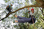 Bestival tree climbing Photographs of the Isle of Wight by photographer Patrick Eden