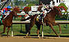 Funny Cide - variety pack of the beloved American classic winner