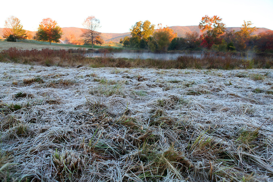 Frost in Albemarle County, VA. Photo/Andrew Shurtleff