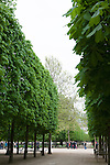 Row of trees, Tuileries Gardens (Jardin des Tuileries) in spring, Paris, France, Europe