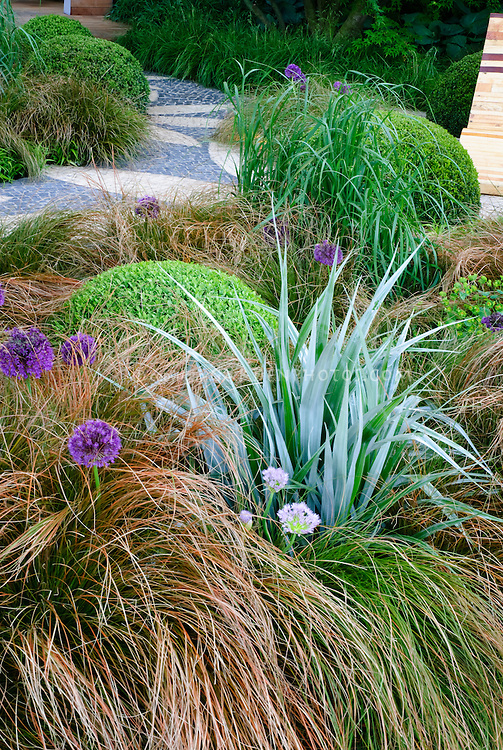 Cool colored soothing garden bed plant flower stock for Small grasses for gardens
