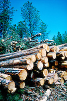 LOGGING.Logged White Pine Trees.Black Hills, SD.
