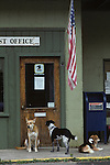 Dogs waiting for owner to leave Post office along the Oregon Coast Ocean City Oregon State USA