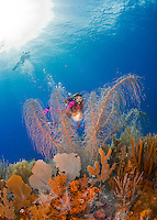 24 July 2015: SCUBA Diver Sally Herschorn swims towards some soft coral at Hammerhead Hill, on the North Shore of Grand Cayman Island. Located in the British West Indies in the Caribbean, the Cayman Islands are renowned for excellent scuba diving, snorkeling, beaches and banking.  Mandatory Credit: Ed Wolfstein Photo *** RAW (NEF) Image File Available ***