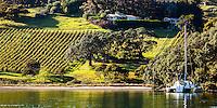 Vinyard on coast of Rocky Bay, Waiheke Island, New Zealand.