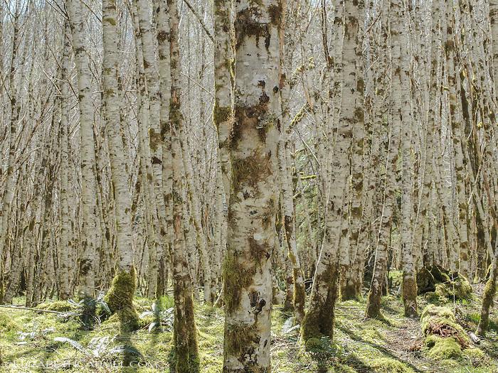Forest Illusion5