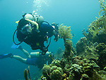 Diving Bonaire, Netherland Antilles -- Divers explore the reef at the &quot;Karpata&quot; dive site.