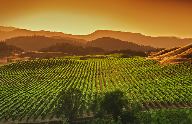 vineyard in Pope Valley, part of Napa Valley