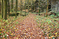 hiking trail through forest covered with autumn leaves, Oberfalz, Bavaria, Germany