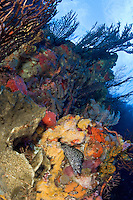 Coral Reef Scenic with moray eel<br /> Fish Mouth<br /> Grenadines