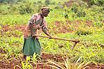 Rachel Louhanga farms near Dundube Kadambo, in northern Malawi.