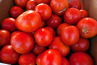 Tomatoes, savory, red, edible fruit,  (Solanum lycopersicum) Farm-fresh produce fresh, fruits, vegetables,