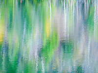 &quot;POND PALETTE&quot;<br /> <br /> Aspen and evergreen are reflected in a mountain pond water creating an impressionist work of art. Nature uses water as her painter's palette to create surreal art. ORIGINAL 24 X 36 GALLERY WRAPPED CANVAS SIGNED BY THE ARTIST $2,500. CONTACT FOR AVAILABILITY.