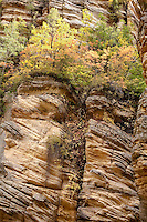 Autumn color in the canyons of the Mogollon rim, in Northern Arizona.