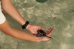 WWF Malaysia Marine Biologist Nina Ho release a baby green turtle in Sibuan Island