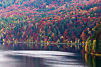 Colorful trees in Autumn, Weissensee, Allgäu - Bavaria, Germany